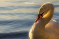80D__MG_2014-Modifica